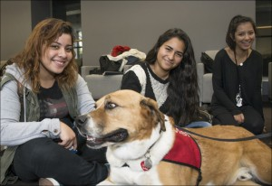 Boxer mix dog named Mel and students