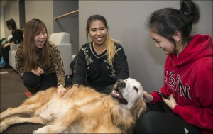 Golden Retriever named Rocket and students