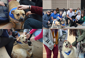 Therapy Dogs at the Oviatt Library