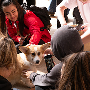 students petting a therapy dog at the oviatt library