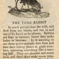 A description of rabbits for children in Book of Beasts, page 3