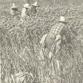 Immigrant workers on fruit farm. Report from the Center of Philosophy & Public Policy, 1981.