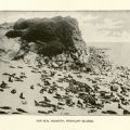 Fur seal rookery in the Pribilof Islands. F908 .U672