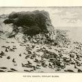 Fur seal rookery in the Pribilof Islands. F908 .U672