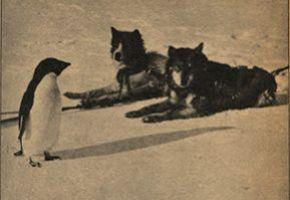 Newsreel Penguin