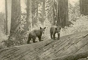 The Lore and the Lure of Sequoia and Kings Canyon