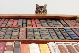 cat looking down books