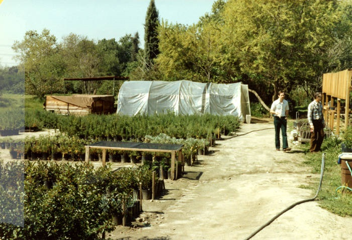 Greenhouse, saplings, and volunteers at the Sepulveda Wildlife Reserve, April 1981